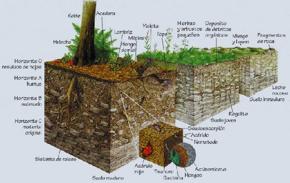 Fundamentos de planificaci n de sitios for 4 usos del suelo en colombia