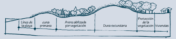 2.3.1: Seccíon transversal típica de las dunas
