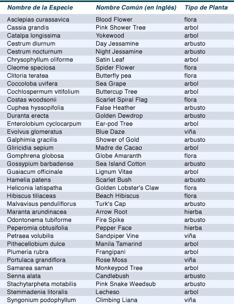 Tabla 2.5.3 Plantas Ornamentales