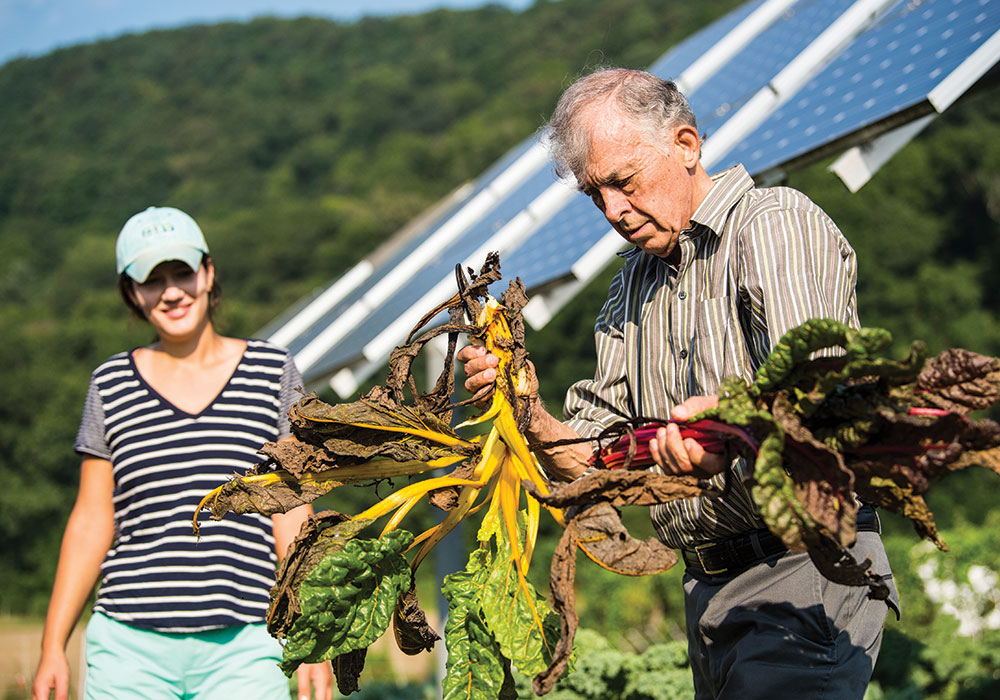 At a University of Massachusetts test site in South Deerfield, a grad student and professor harvest Swiss chard growing under PV arrays. A National Renewable Energy Laboratory project is underway to study the compatibility and mutual benefits of solar development with agriculture and native landscapes. Photo by INSPIRE, NREL/DOE.