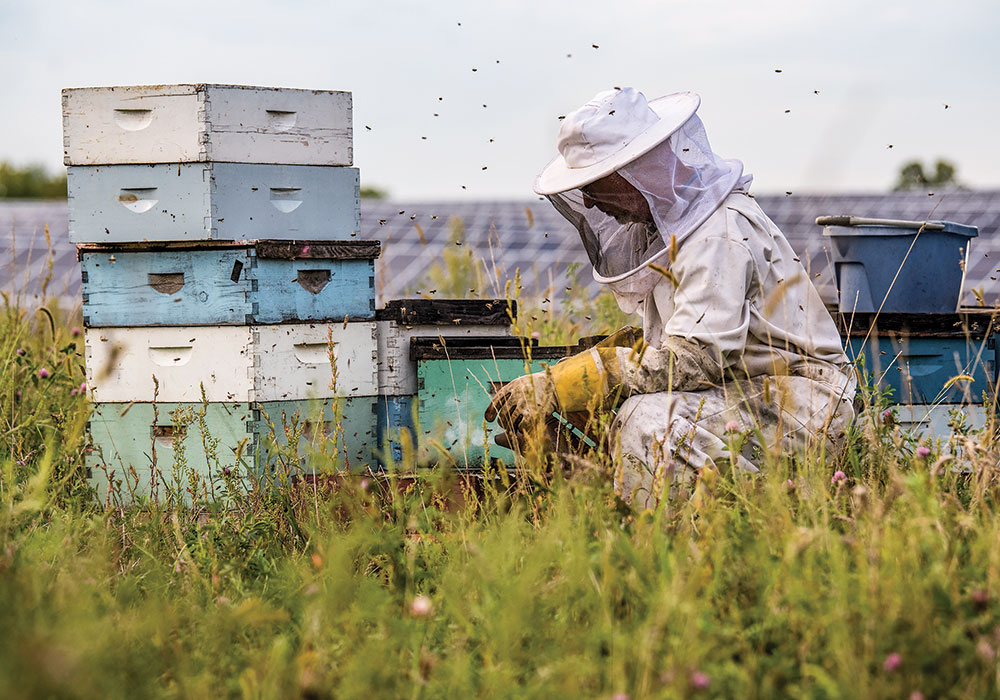 Bees thrive outside IMS Solar in St. Joseph, Minnesota. Photo by Dennis Schroeder, NREL/DOE.