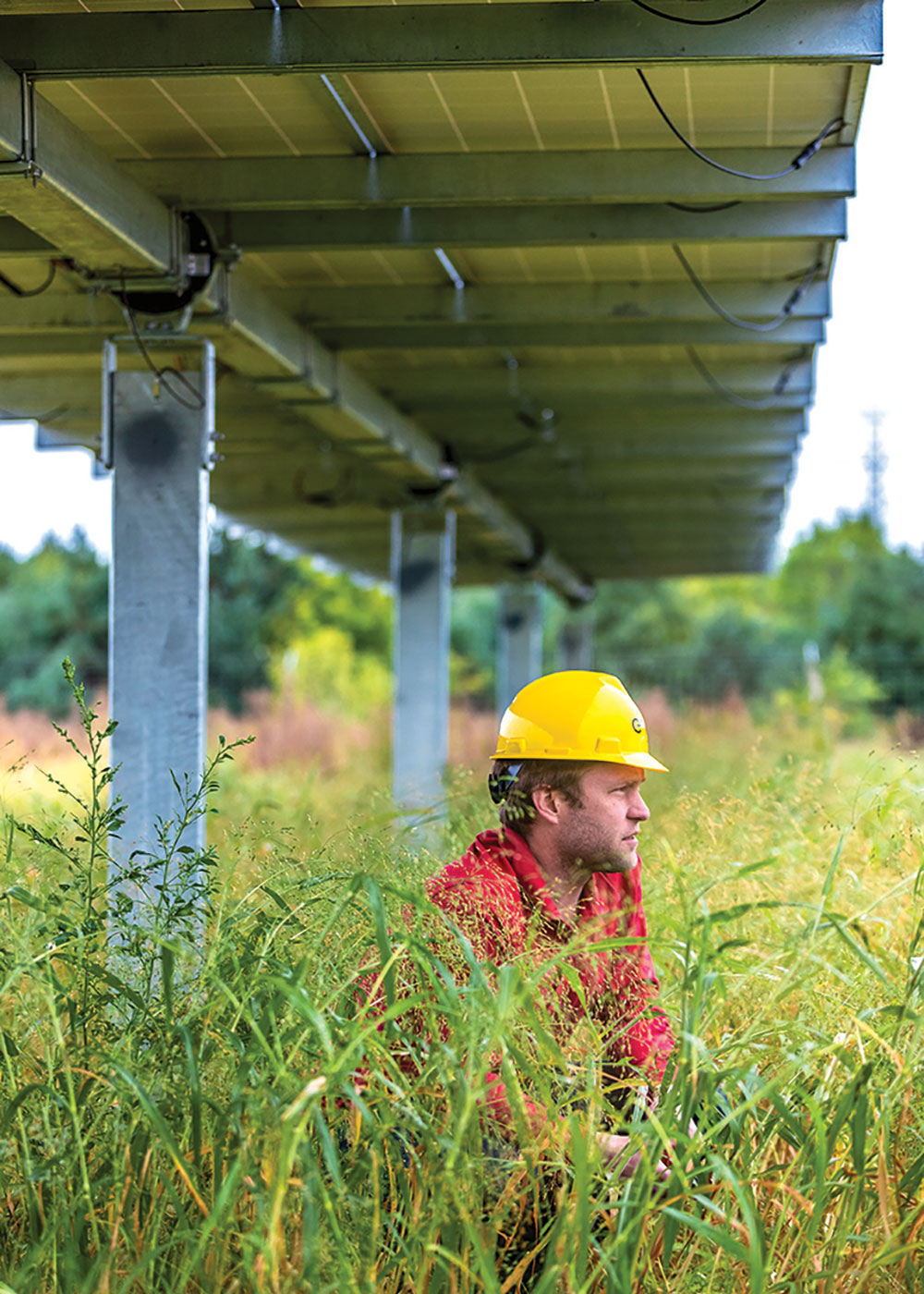 A pollinator test plot underneath the PV array at the Chisago Solar Site in Minnesota. Photo courtesy INSPIRE-Minnesota, NREL/DOE.