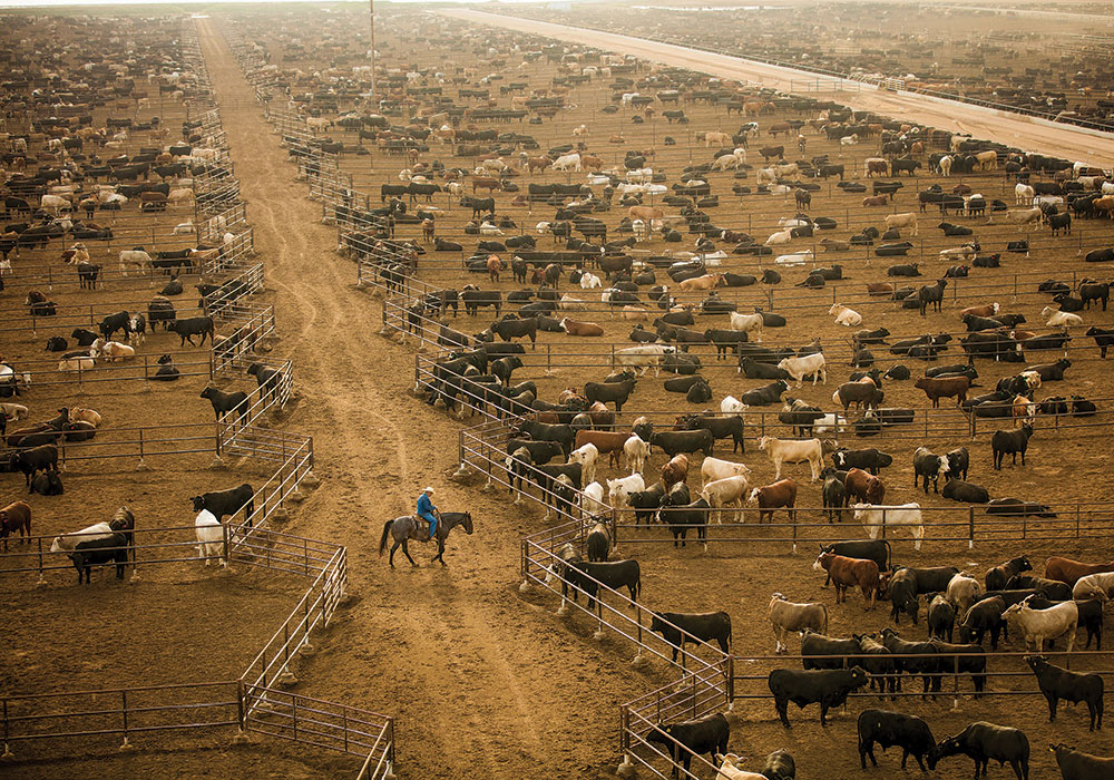 Livestock operations are responsible for more than seven percent of U.S. greenhouse gas emissions, according to the National Center for Environmental Health. CAFOs can produce more waste than some U.S. cities, and they store excess manure in lagoons or pits, where it breaks down anaerobically (without oxygen), which exacerbates methane production. Photo by George Steinmetz/The New York Times.