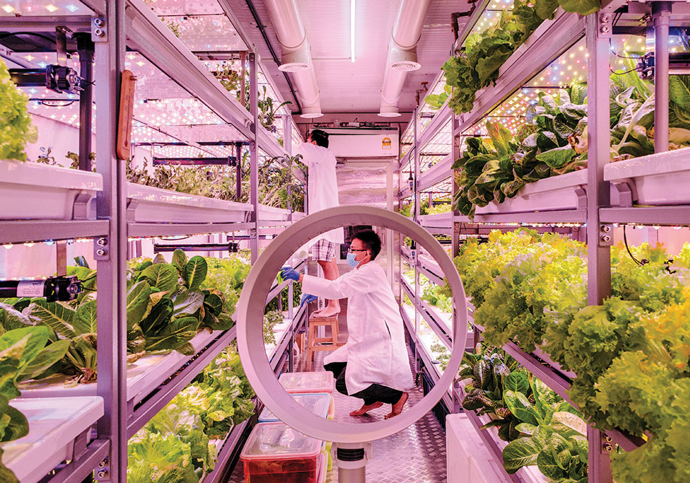 The Vegetable Co. in Kuala Lumpur grows vegetables vertically under LED lights in a 320-foot shipping container on the edge of a parking lot. They are one of a growing number of small farms around the world selling, and in their case delivering, directly to local consumers. Photo by Ian Teh/The New York Times.