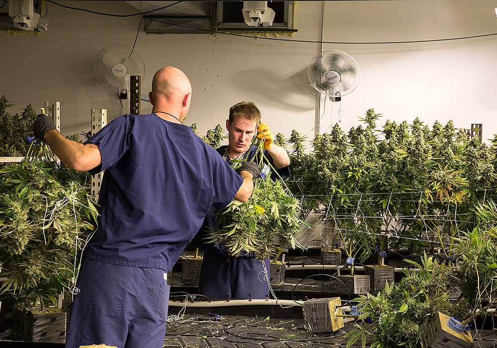 In Denver, cannabis production facilities, including the warehouse pictured above, are only allowed in areas zoned for industrial land use. Photo by David Kidd/Governing