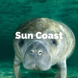 sun coast.png